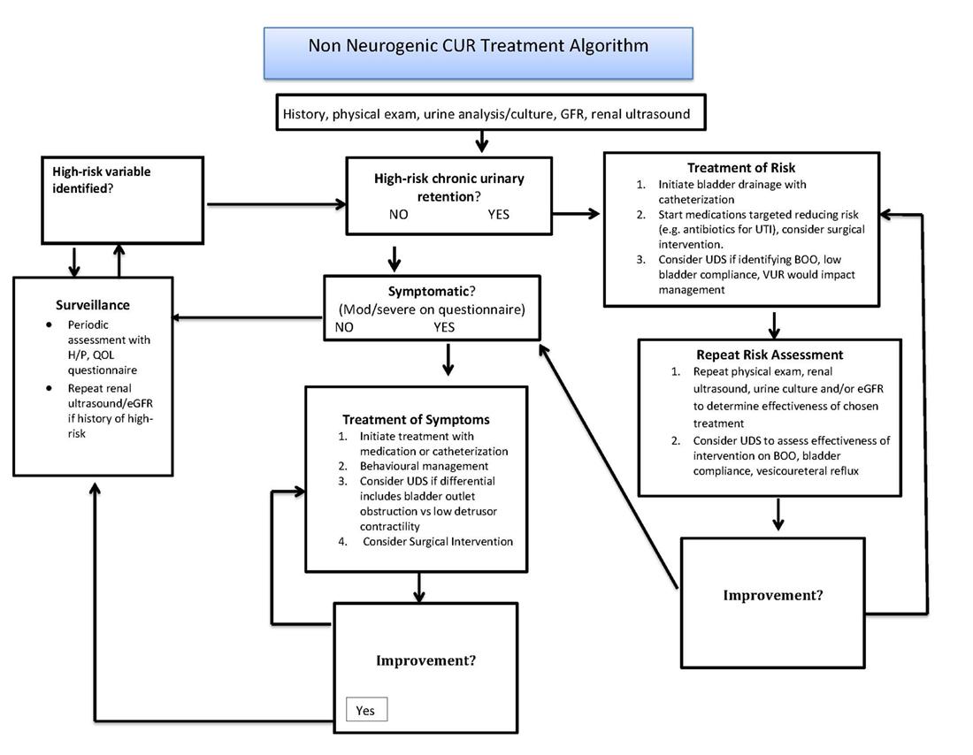 american urological association non neurogenic chronic urinary rh auanet org Urinary Bladder Cancer Urinary Bladder Cysts